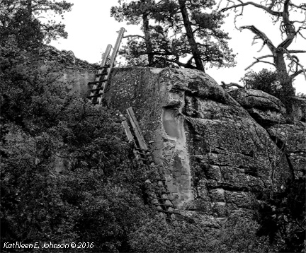 porcupine_ladders_inkoutlinesp