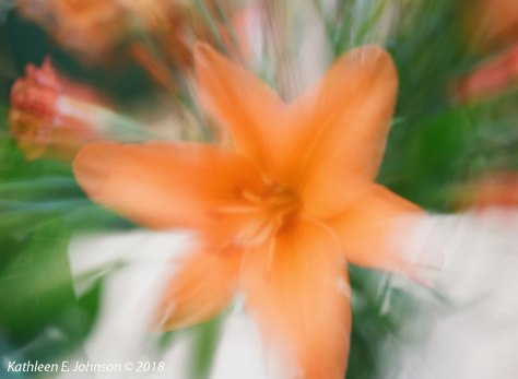 KE_Johnson_Day_Lily