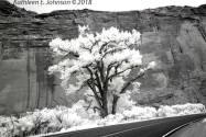 LongCanyonTree_Crop1