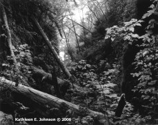 Fern_Canyon4