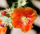 ColorPlus200_Orange