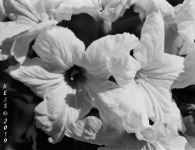 Botanicals_Mayo_Garden