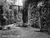 Fern_Canyon3