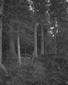 VanLakeTrees2