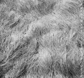 As_the_Grass_Grows