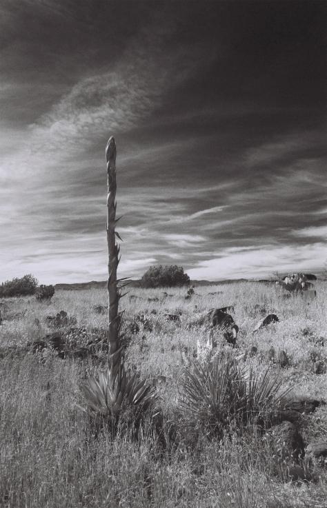 Arcosanti_Yucca