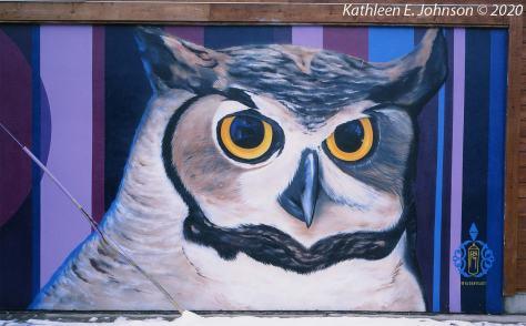 Owl_Velvia50