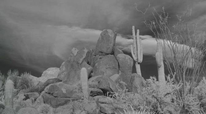 THE SAGUAROS PART II